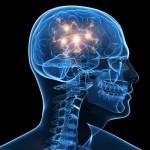 Paneigta 10 mitų apie smegenis: alkoholis smegenų ląstelių nenužudys, Mocartas genijaus neužaugins