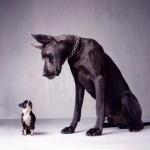 Įkasti gali ne tik pikti šunys – kaip netapti agresyvaus gyvūno auka