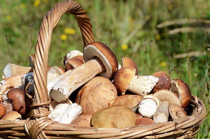 Geriausias grybų paruošimo būdas, išsaugant maistines jų medžiagas, yra greitasis kepimas maišant. (15min.lt nuotr.)
