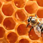 Medus veikia antibiotikams antsparius mikroorganizmus
