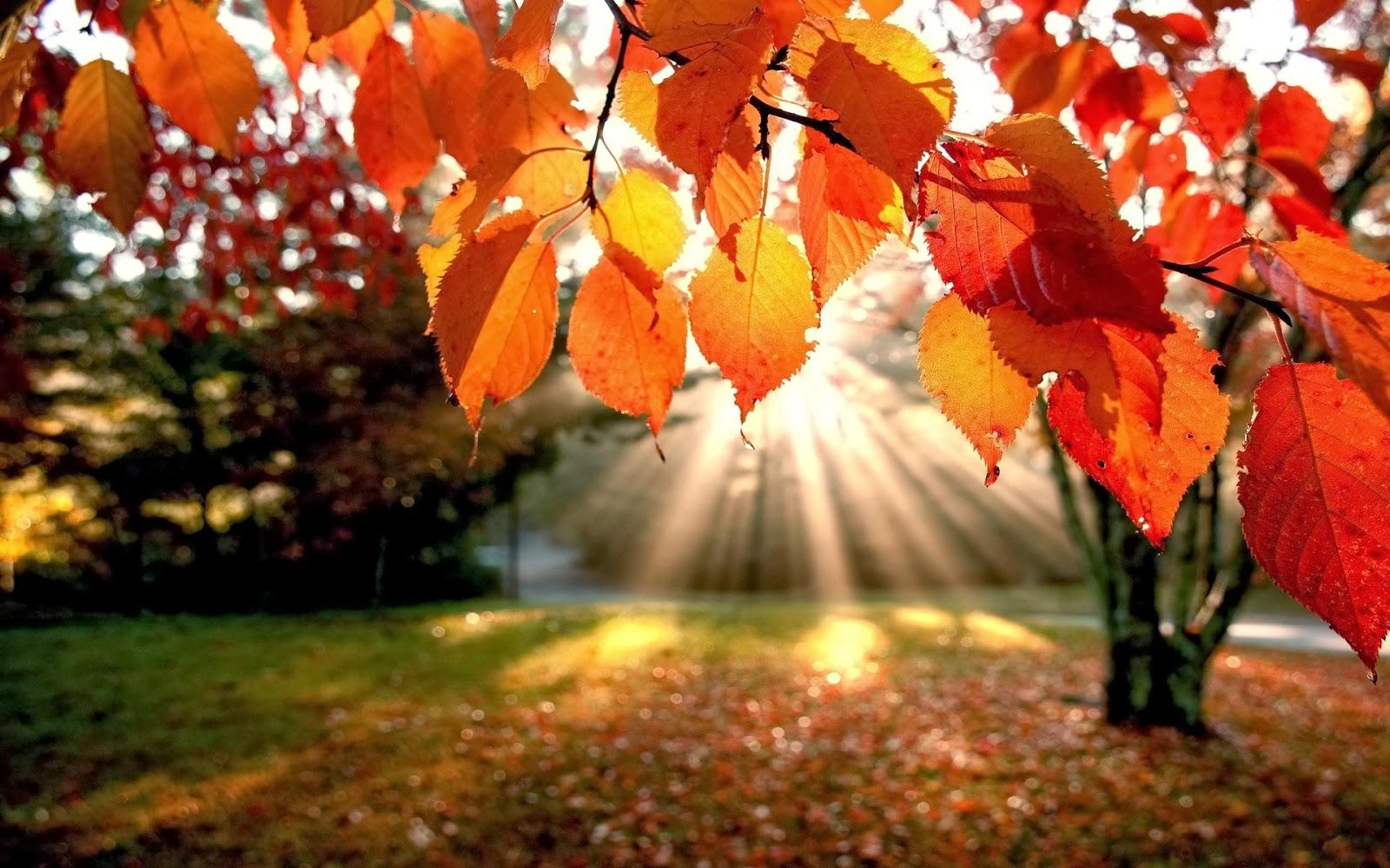 Neretai nemalonius pojūčius ar net ligas sukelia staigus saulės spindulių sumažėjimas, o tai savo ruožtu lemia sulėtėjusią vitamino D gamybą žmogaus organizme. (saulejo.blogspot.com nuotr.)