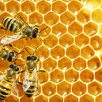 Žinomo prekybos tinklo meduje – antibiotikų liekanos