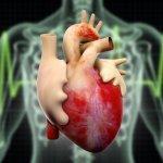 2016 m. Europos hipertenzijos kongreso apžvalga