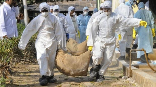 Nuo 2003 metų iki 2014 metų spalio 2 dienos laboratorijose patvirtinti 668 žmonių užsikrėtimo H5N1 virusu atvejai 16 šalių. Iš jų 393 žmonės mirė. (cbc.ca nuotr.)