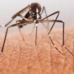 Per keturias dienas – keturi įvežtinės maliarijos atvejai