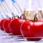 Leido ES šalims uždrausti auginti GM kultūras