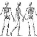 Anatominės variacijos, kurias galite turėti ir jūs