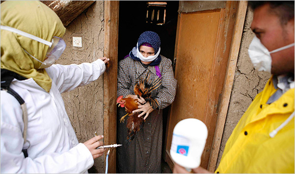 Nuo protrūkio pradžios Egipte ir Kinijoje užregistruota 380 šios gripo atmainos atvejų, iš jų – 145 mirties. (nytimes.com nuotr.)
