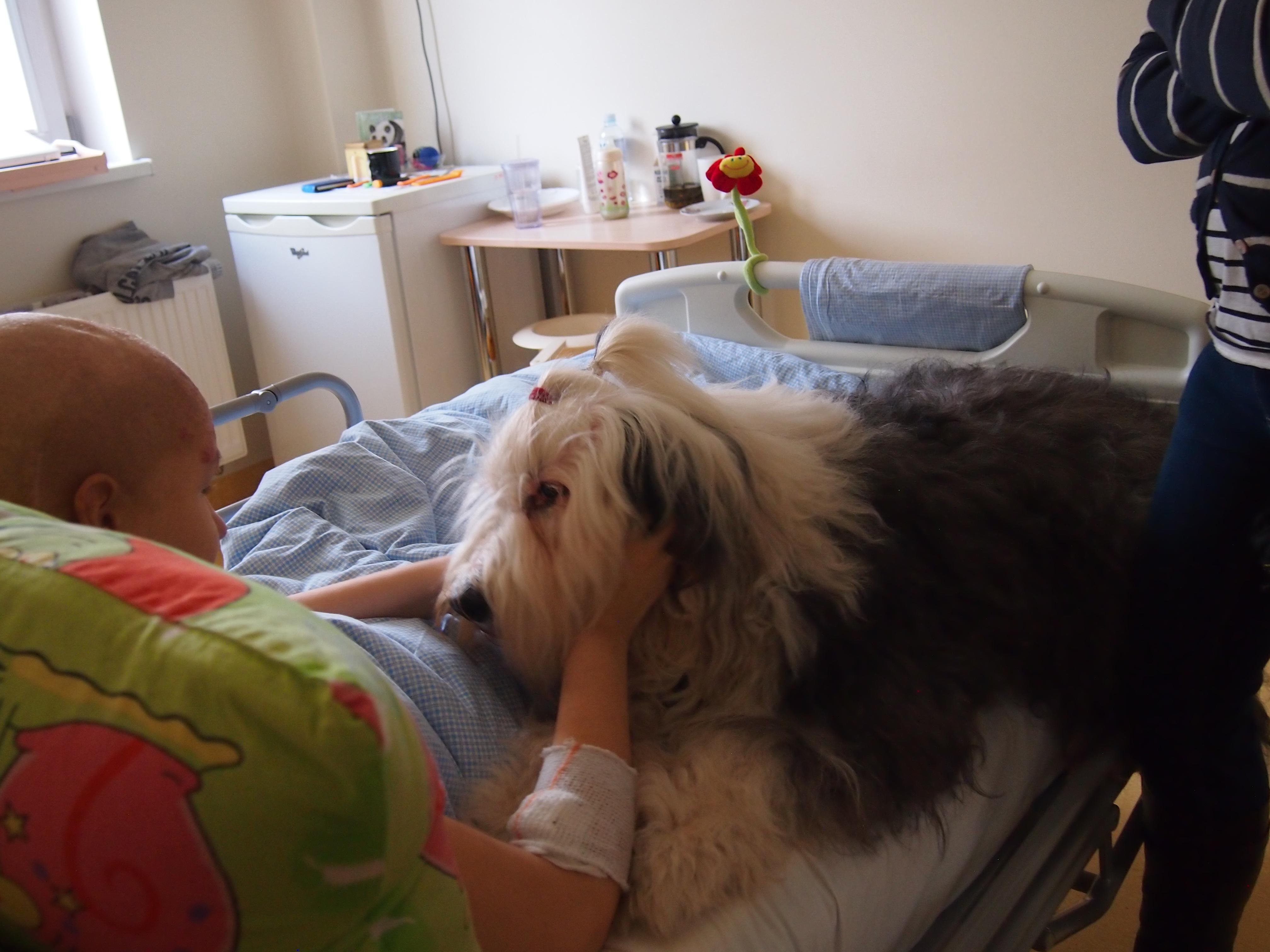 Moksliniais tyrimais įrodyta, kad bendravimas su šunimis, jų glostymas ir stebėjimas teigiamai veikia emocinę žmogaus savijautą. (K. Marcinkevičiūtės nuotr.)