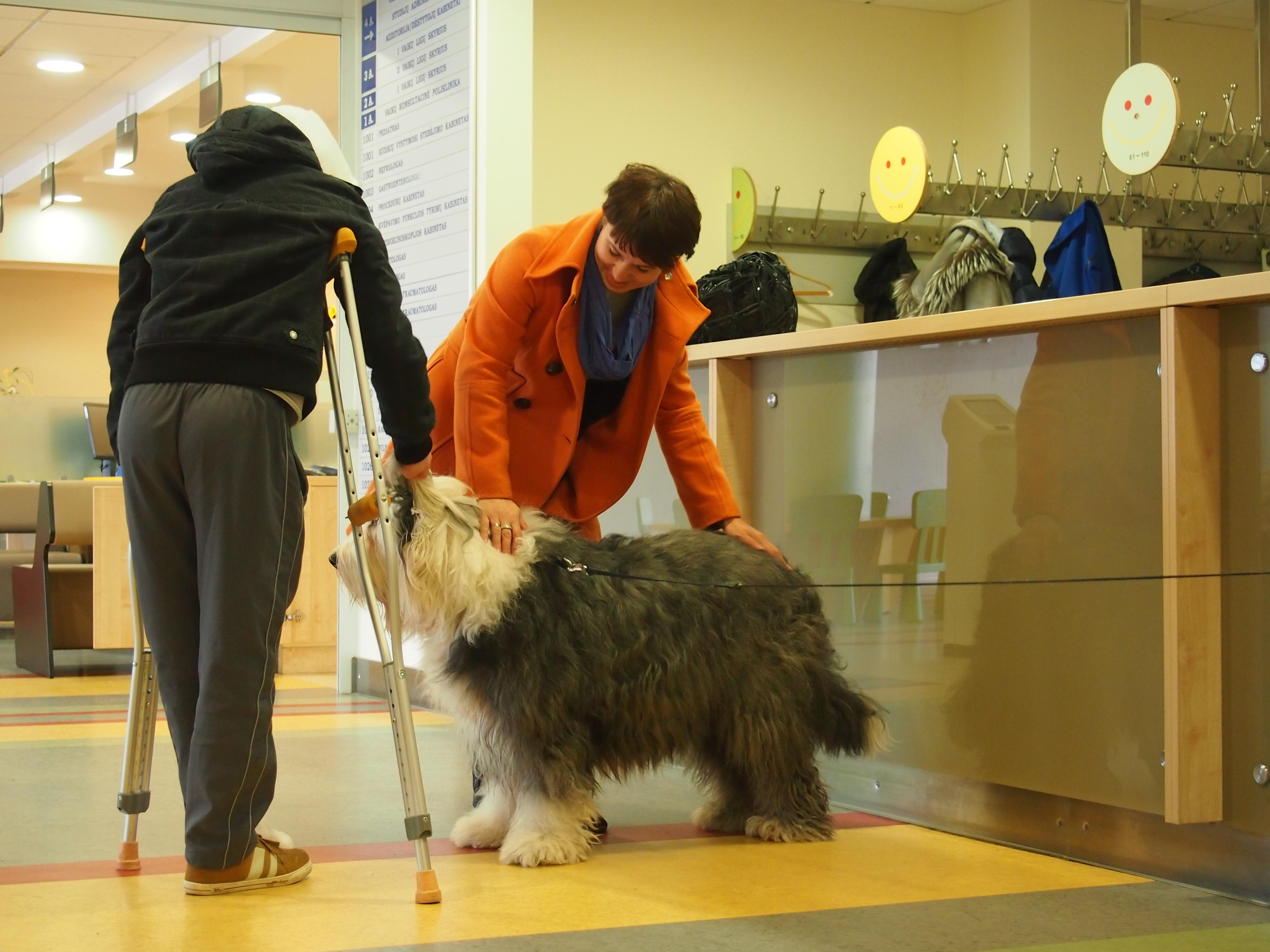 Visi šunys yra sertifikuoti, išlaikę šunų psichikos testą bei pripažinti tinkamais dirbti kaniterapijos darbą. (K. Marcinkevičiūtės nuotr.)