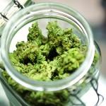 Medicininė marichuana, arba kai nauda nusveria žalą