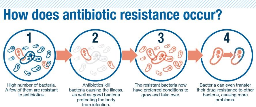 Kaip išsivysto bakterijų rezistentiškumas antibiotikams?  1 – Sergančiojo organizme yra daugybė bakterijų, sukėlusių ligą. Kelios iš jų gali būti atsparios antibiotikams (pavyzdžiui, dėl jose įvykusių spontaninių mutacijų); 2 – Antibiotikai sunaikina ligą sukeliančias bakterijas bei dalį natūralios organizmo mikrofloros; 3 – Sunaikinus kitas bakterijas ir nelikus konkurencijos rezistentiškos vaistams bakterijos ima sparčiai daugintis, jos gali būti perduotos kitiems žmonėms; 4 – Bakterijos rezistentiškumo genus gali perduoti kitoms bakterijoms.