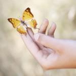 Šviesos ir drugelių terapija – imuninei sistemai, miegui, psichinei sveikatai gerinti