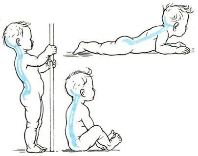 Natūralūs stuburo linkiai susiformuoja vaikui augant. Krūtininė kifozė formuojasi vaikui padėjus sėdėti, o juosmeninė lordozė bei kryžkaulinė kifozė – pradėjus stovėti. (medicalency.com nuotr.)