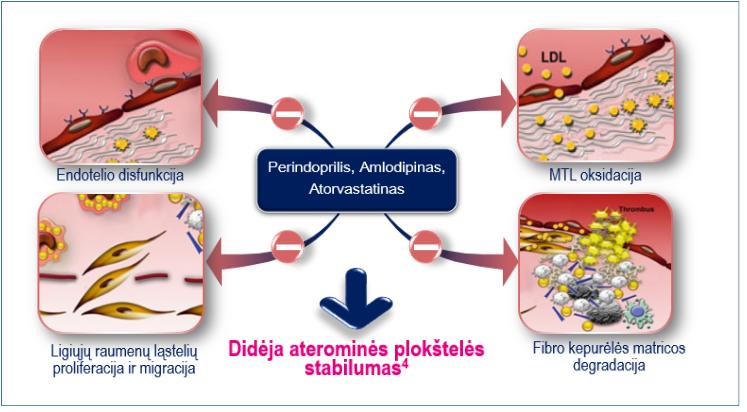 Antiaterosklerozinis perindoprilio, amlodipino ir atovarstatino poveikis