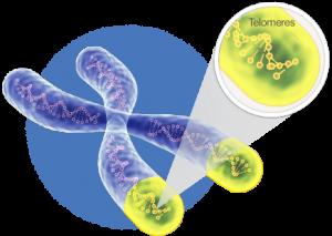 telomerai